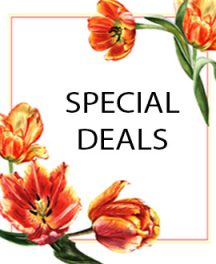 deal02